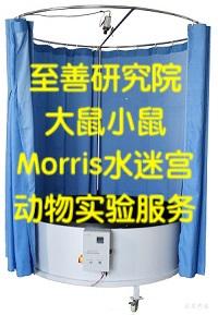 推荐北京大小鼠Morris水迷宫行为认知记忆学习能力实验服务