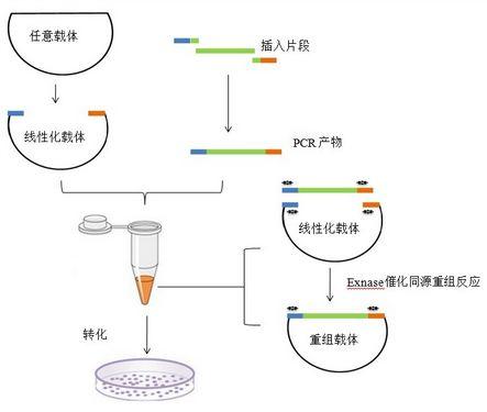 【提供北京专业优质基因克隆技术实验外包服务】