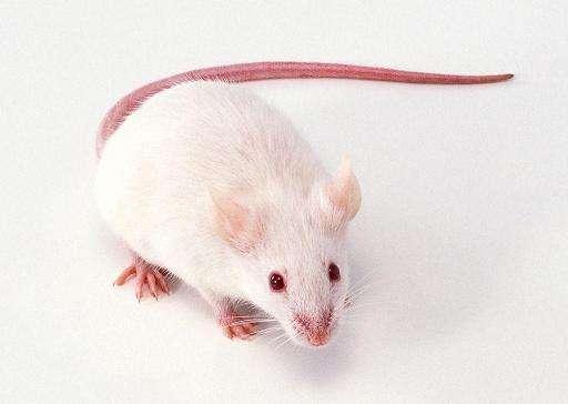 【hAce2新冠ICR-Tg(hACE2)转基因小鼠价格低】